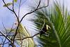 Toucan in the morning sun