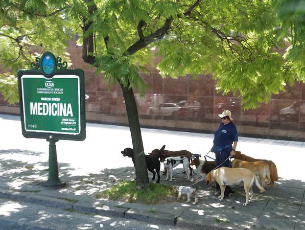 Buenos Aires - dog walker