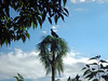 Vulture with great perch