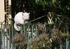 Valpariso, contented cat