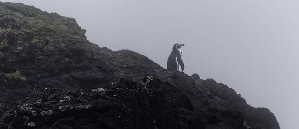 Chiloé Island, Chile - pinguin vigil