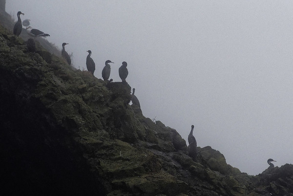 Chiloé Island, Chile - the usual cast of characters