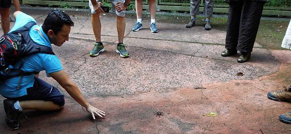 Iguazú Falls - tarantula