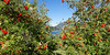 Bariloche, Argentina - Hotel Llao Llao, view through mountain ash trees