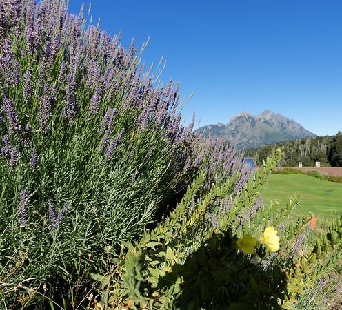 Bariloche, Hotel Llao Llao - lavender and vista