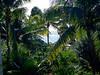 Secrets Akumal - dense vegetation
