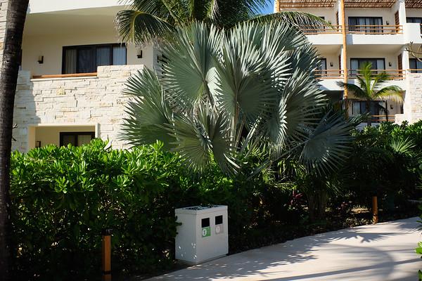 Secrets Akumal - large palm
