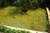 Akumal Secrets - carp pond