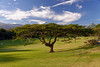Lorito tree, driving range