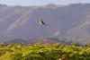 Bird in Lorito tree, Marriott San José Costa Rica