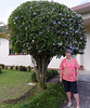 La Fortuna, Church, Suzanne, and Yesterday/Today/Tomorrow grown as a tree