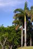 Magnificent palms