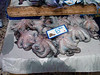 Poros Town, fish market, octopus