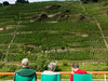from Zell to Cochem, vineyards