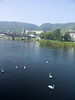 Swans on the Mosel at Cochem