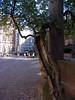 Heidelberg, remarkable tree