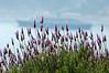 Harbor view<br /> Villa et Jardins, Ephrussi de Rothschild<br /> St Jean Cap Ferrat<br /> Nikkor 70-300mm f/4.5-5.6G IF-ED AF-S VR Zoom