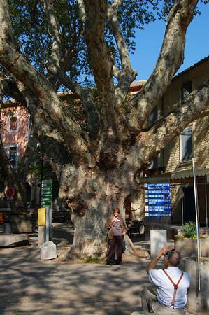 Jack, Ellen, and a really big Plane tree <br /> Fontaine de Vaucluse, France