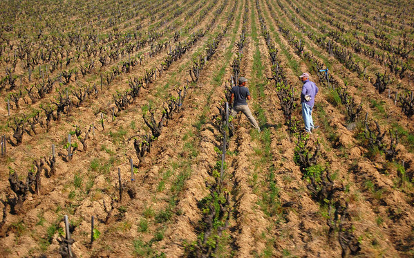 Discussions in the vineyard<br /> Chateauneuf du Pape, France