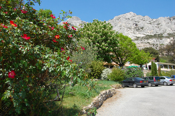 Wild roses and the restaurant <br /> Aix-en-Provence, France