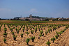 The fields showing wireless vines and the fine rocks-no irrigation!<br /> Chateauneuf du Pape, France