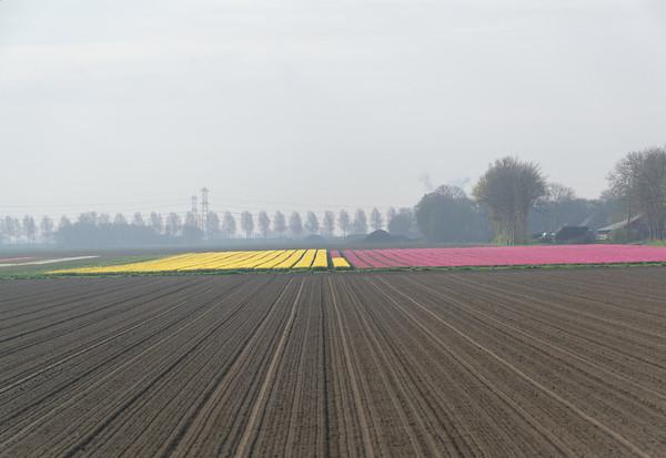 Towards Giethoorn; flower fields
