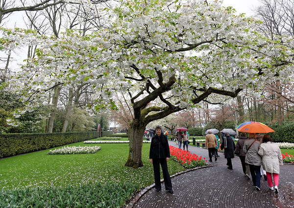 Keukenhof Gardens; Suzanne and flowering tree in the cool mist