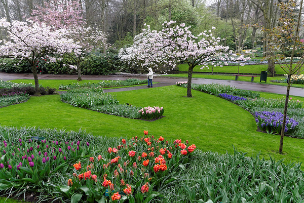 Keukenhof Gardens; tulips, hyacinths, flowering trees in the rain