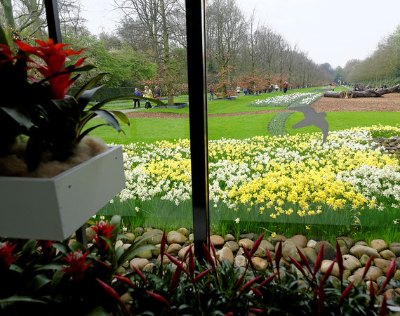 Keukenhof Gardens; daffodils outside and bromiliads in