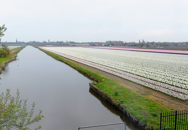 En route to Keukenhof Gardens;  hyacinths and the water necessary to grow them