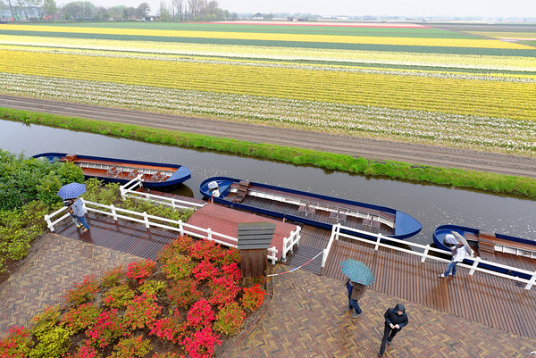 Keukenhof Gardens; flower fields from the top of the windmill