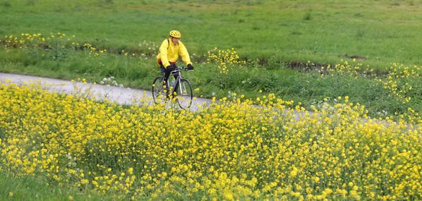 Toward The Hague; cyclist, rain and probably ragweed