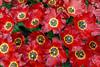 "Keukenhof Gardens; ""Krasa"" tulip"