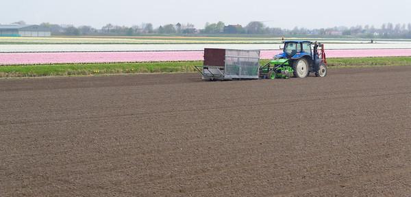 En route to Keukenhof Gardens;  flower fields and tractor