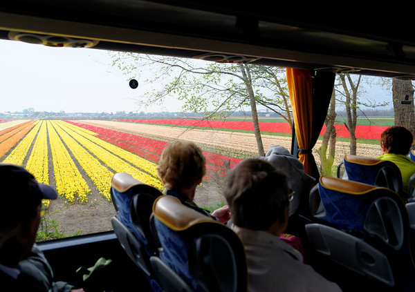 En route to Keukenhof Gardens;  fields of flowers