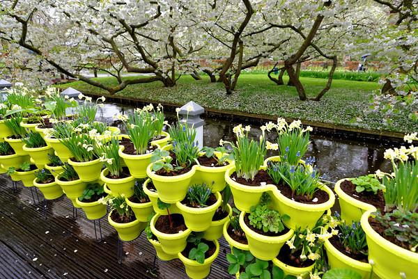 Keukenhof Gardens; pot arrangement