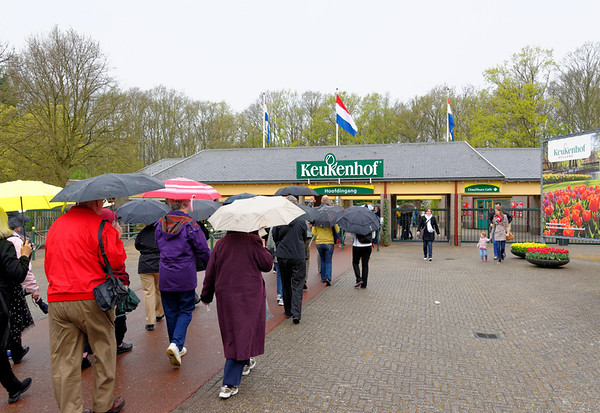 Keukenhof Gardens; a drizzly day softens the colors and brings out the scents