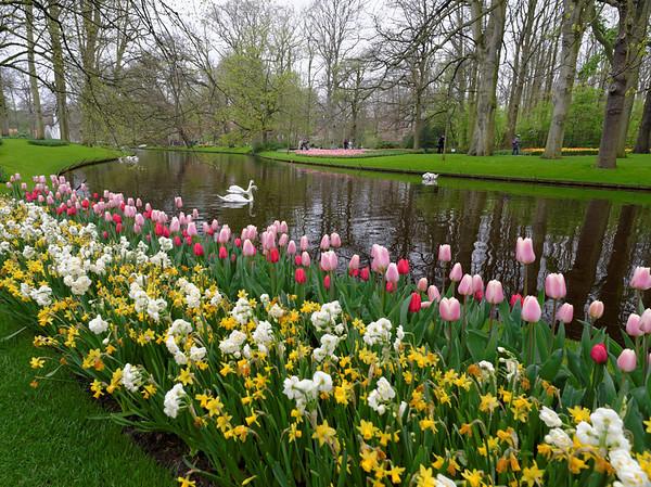 Keukenhof Gardens; swans and tulips