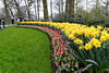 Keukenhof flowers in the rain