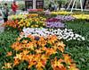 Keukenhof Gardens; tulips everywhere