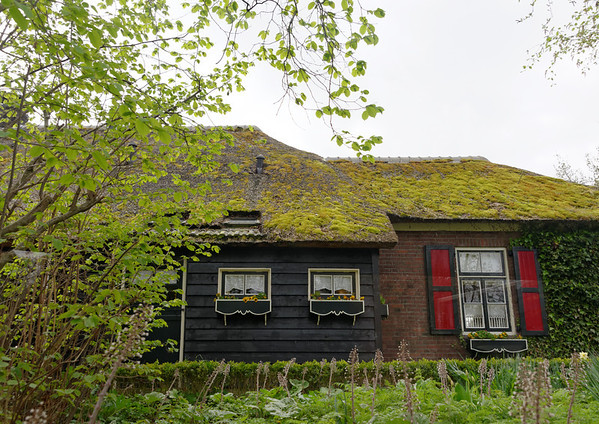 Giethoorn; thatched roof gone bad, may cost up to 30,000 euros to replace