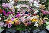 Keukenhof Gardens; orchids everywhere