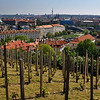 St. Wenceslas Vineyard and view of Prague