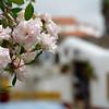 Obidos Portugal - roses