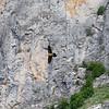 Headed to Gistaín Spain – the Bonecrusher Vulture