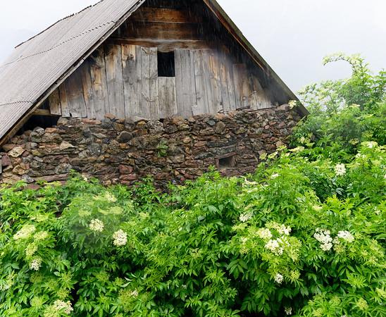 Gistaín Aragon Spain - old building and elderflower bushes