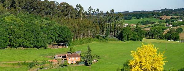outside Santiago de Compostela Spain - Spanish Broom and countryside