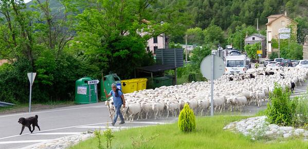 Escalona Aragon Spain – Sheep!