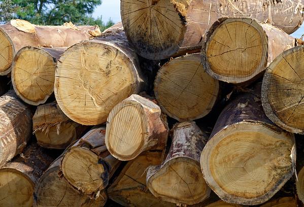 Bermeo, Basque Country, Spain - eucalyptus logs