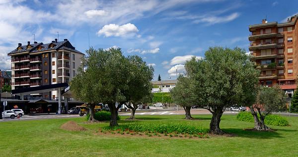 Jaca Aragon Spain - old olive trees